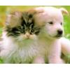 Купить :  Ветеринария.  Биокорректоры для здоровья всех животных